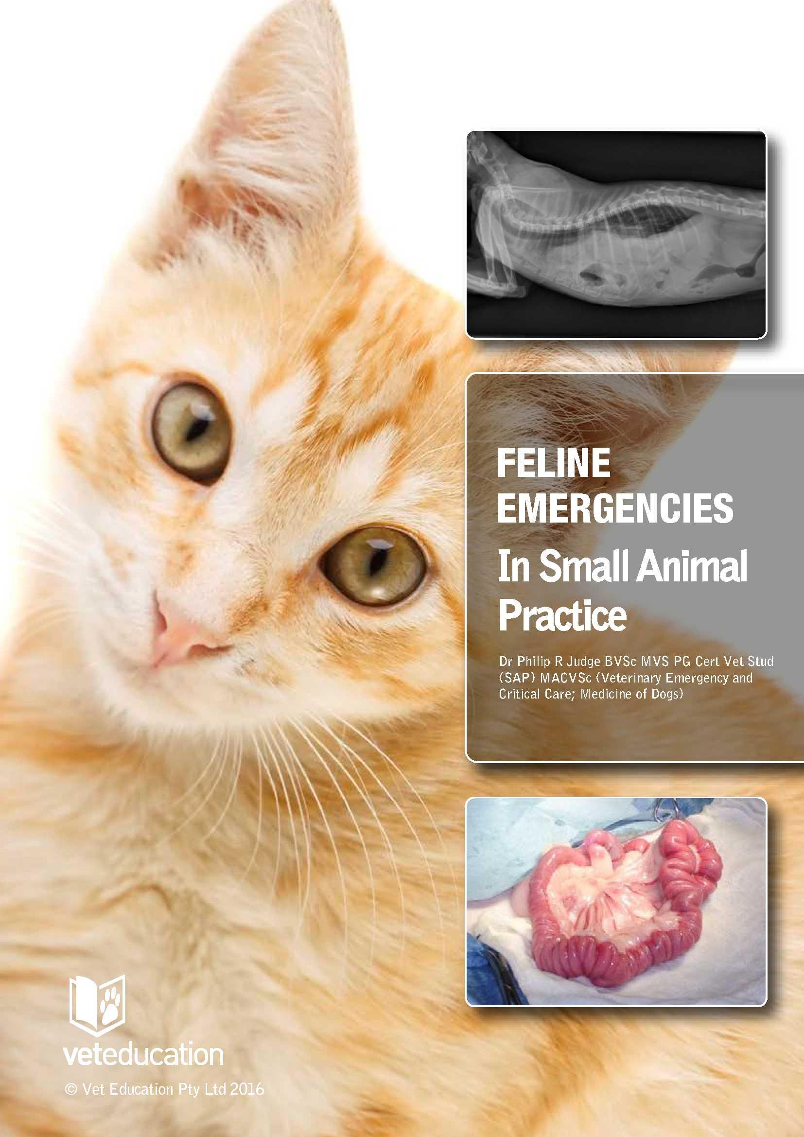 feline cover